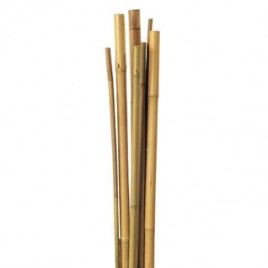 Pack Estaca Bambu 10x