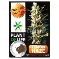 Pollen CBD Lemon Haze 3.8% Plant Of Life 1gr